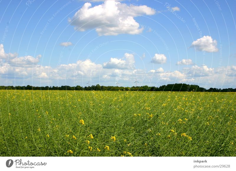 cheerful to cloudy Meadow Canola Clouds Field Beautiful weather Sky Nature