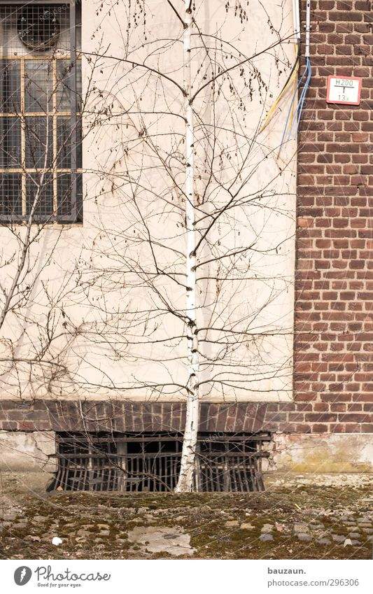Old Plant Tree Wall (building) Wood Wall (barrier) Stone Garden Metal Natural Facade Wild Signs and labeling Growth Concrete Bushes