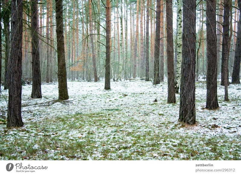 Borgsdorf Environment Nature Landscape Earth Winter Climate Climate change Weather Bad weather Ice Frost Snow Forest Fitness Hiking wallroth Coniferous forest