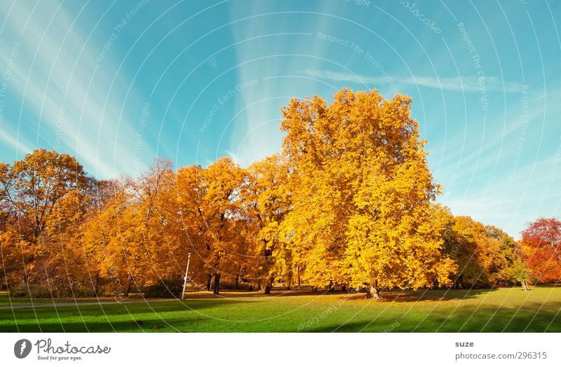 color space Environment Nature Landscape Plant Sky Autumn Climate Weather Beautiful weather Tree Park Meadow Esthetic Fantastic Blue Yellow Gold Green Autumnal