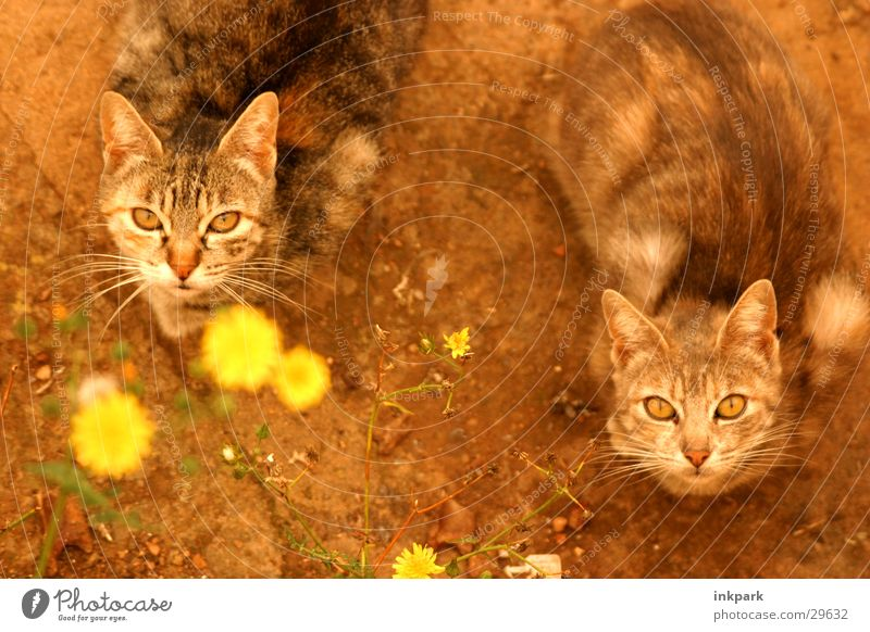 Flower Nutrition Cat Wait Transport Expectation