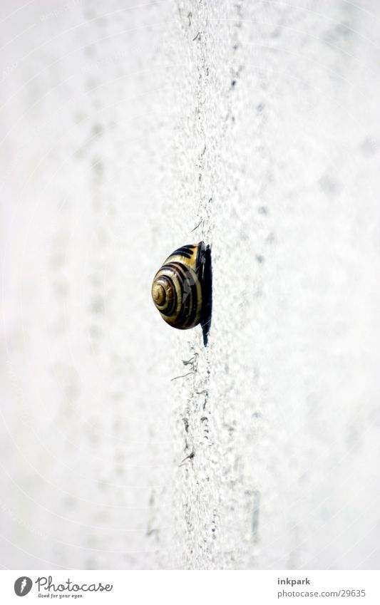 a long way Slowly Wall (building) House (Residential Structure) Transport Snail Lanes & trails Deep