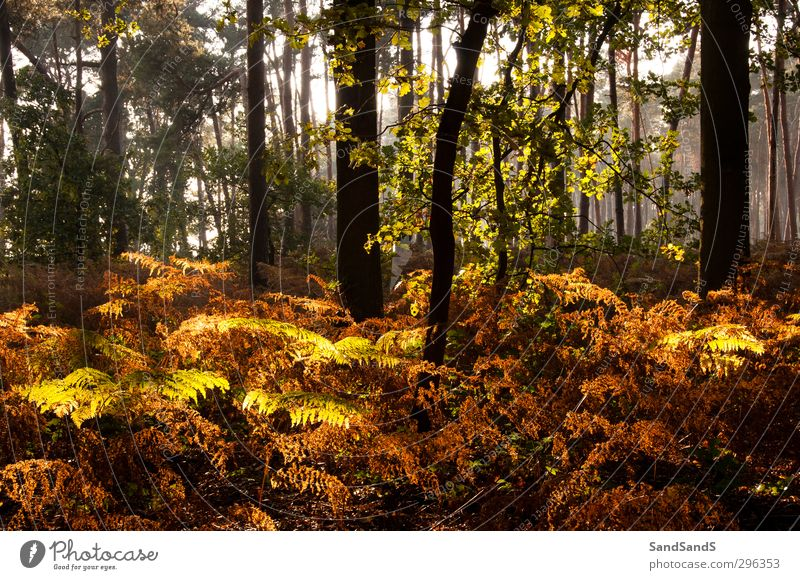 Forest light Autumn Tree Leaf Brown Yellow Colour fall fern sunshine wood Exterior shot