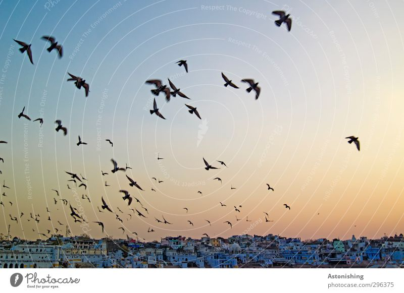 Sky Blue Vacation & Travel City Animal House (Residential Structure) Wall (building) Wall (barrier) Building Horizon Travel photography Bird Orange Weather