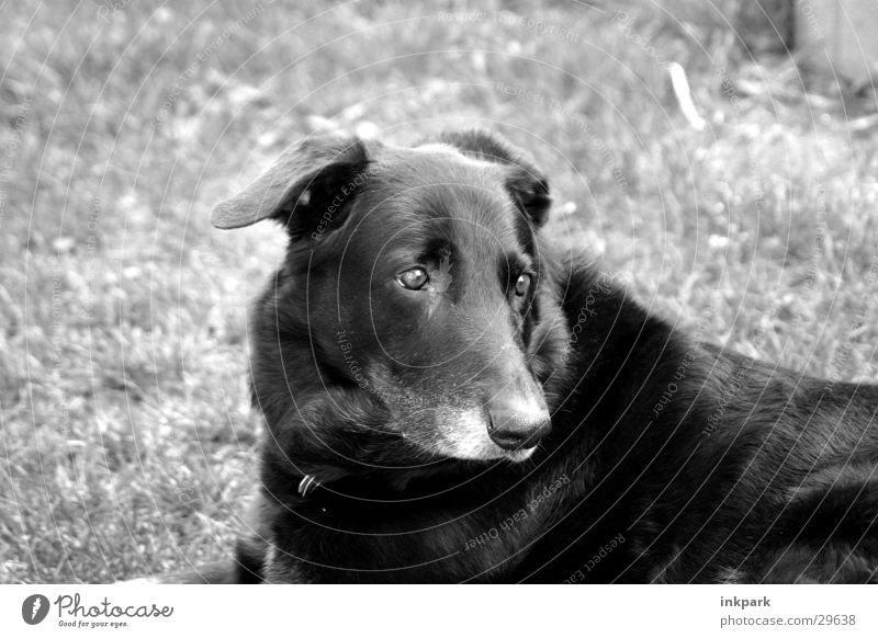 On the dog come Dog Think Black Dream Transport grass colorless.