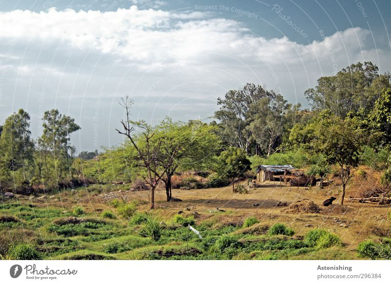 Agriculture in India Environment Nature Landscape Plant Earth Sky Clouds Spring Weather Beautiful weather Warmth Tree Grass Bushes Leaf Foliage plant