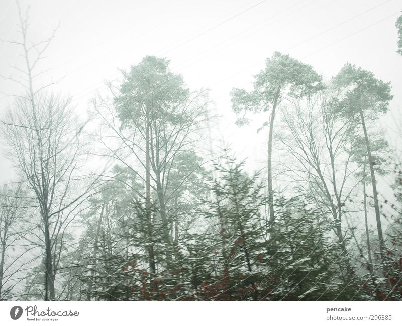 Nature Green Tree Naked Landscape Winter Forest Far-off places Spring Fog Speed Thin Turquoise Fir tree Pine Lake Constance