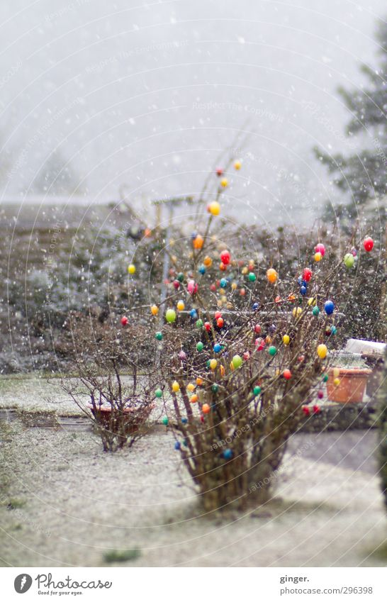 When Easter and Christmas fell on one day. Environment Nature Plant Spring Winter Climate Weather Bad weather Snow Snowfall Bushes Garden Freeze