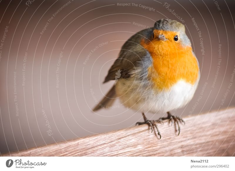 Nature Beautiful Red Animal Funny Happy Bird Orange Wait Stand Cool (slang) Cute Wing Animal face Robin redbreast