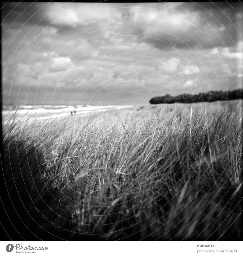 Nature Plant Landscape Animal Clouds Beach Relaxation Autumn Grass Coast Natural Moody Art Waves Leisure and hobbies Authentic