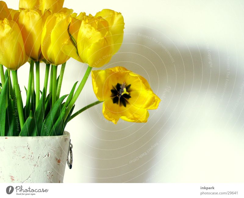 Look at me Flower Tulip Vase Yellow Green Plant Decoration