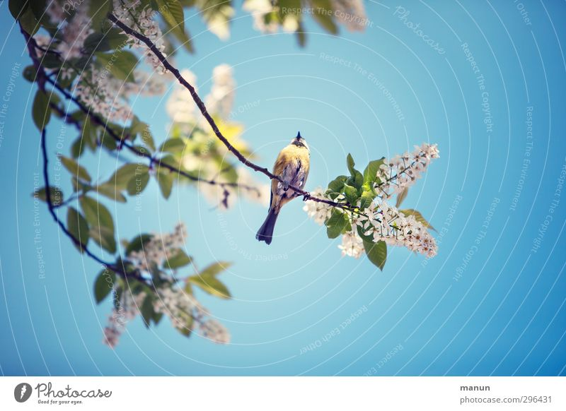 blue tit Garden Nature Spring Tree Twigs and branches Animal Wild animal Bird Tit mouse 1 Observe Relaxation To hold on To enjoy Sit Wait Free Small Natural