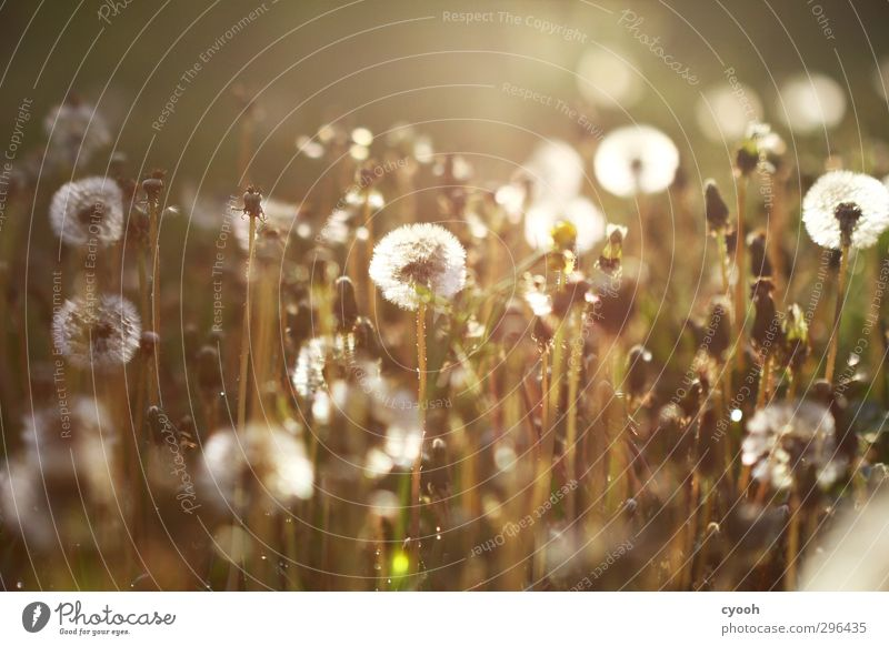 Lights. Nature Summer Autumn Beautiful weather Warmth Plant Grass Blossom Meadow Blossoming Flying To enjoy Illuminate Faded To dry up Growth Dark Bright Cold