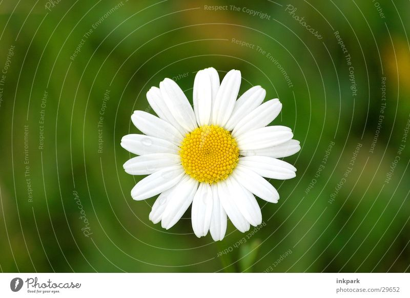 Portrait of a flower Flower Daisy Blossom Leaf Summer Meadow Macro (Extreme close-up)