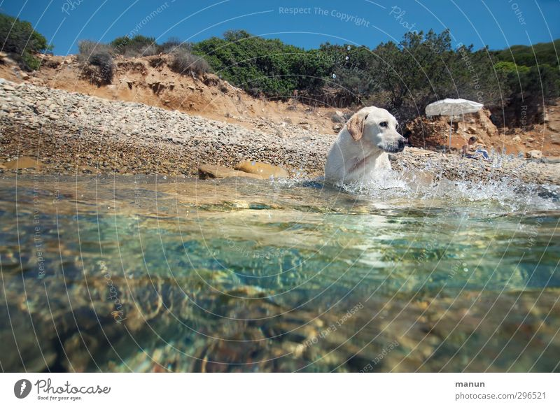 water rat Vacation & Travel Summer Summer vacation Sun Sunbathing Beach Ocean Aquatics Boy (child) 1 Human being Water Warmth Coast Bay Pet Dog Labrador Animal