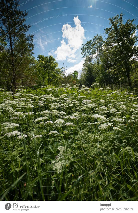 spring Environment Nature Landscape Plant Air Sky Clouds Sun Spring Summer Beautiful weather Tree Flower Foliage plant Wild plant Meadow Forest Fresh Near