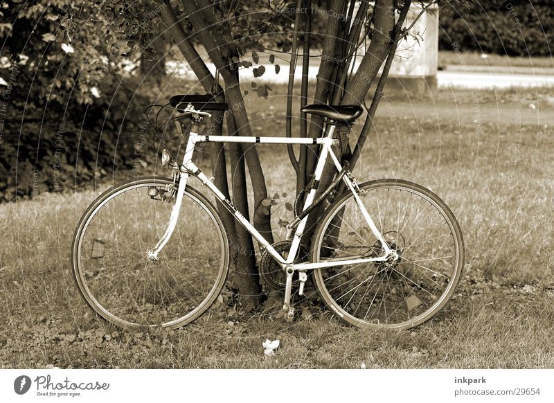 Been fast Bicycle Tree Meadow Driving Sports Relaxation