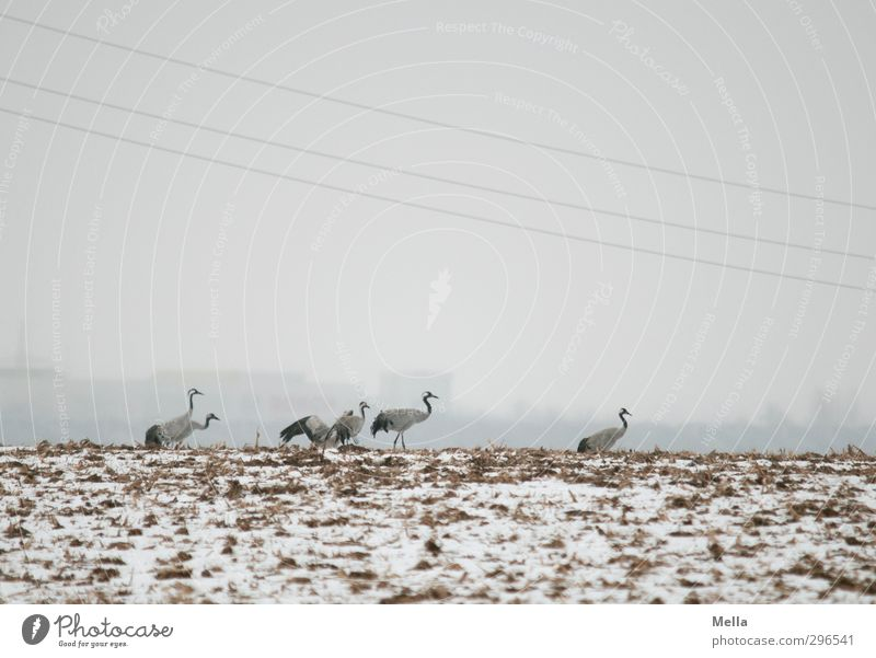 Sky Nature Landscape Animal Winter House (Residential Structure) Environment Cold Snow Freedom Gray Natural Bird Going Field Earth