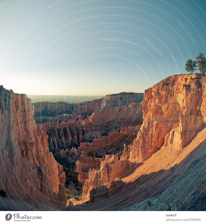 Blue Tree Mountain Warmth Above Brown Orange Beautiful weather Uniqueness Cloudless sky Canyon Shame Bryce Canyon