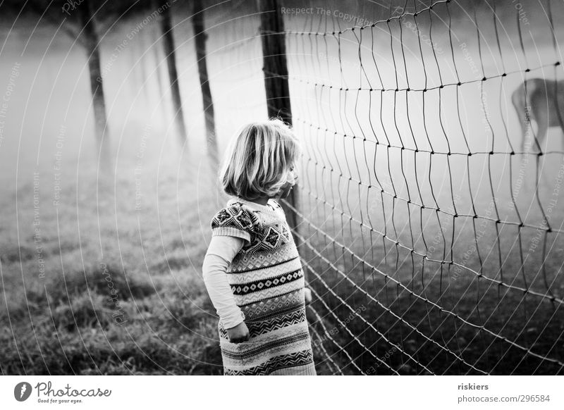 on the other side of the fence ii Feminine Child Girl Infancy 1 Human being 1 - 3 years Toddler 3 - 8 years Environment Animal Spring Autumn Fog Field Observe