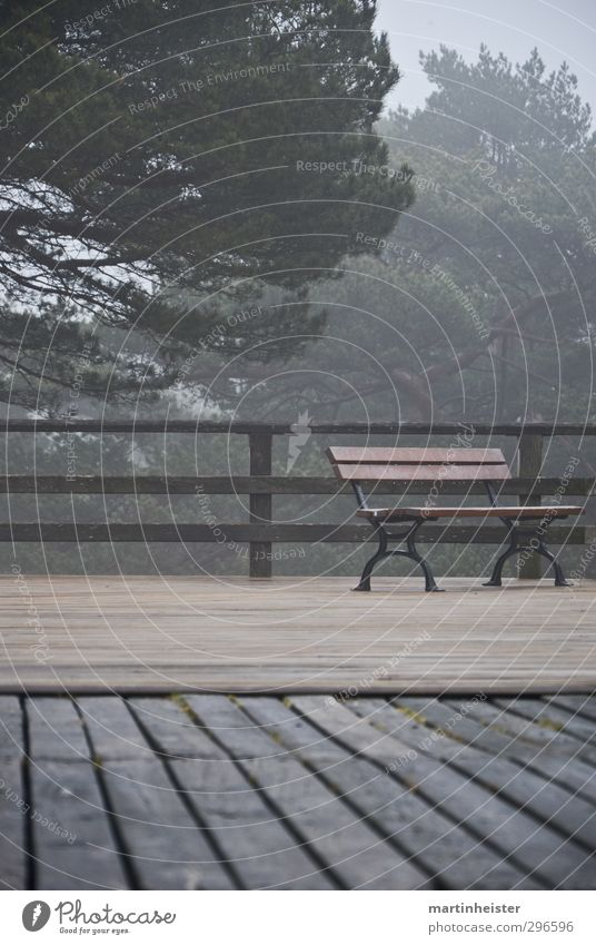 Lonely place Nature Bad weather Breathe Relaxation Sit Wait Cold Gloomy Brown Gray Green Calm Loneliness Time Haze Wood Bench terrace Subdued colour