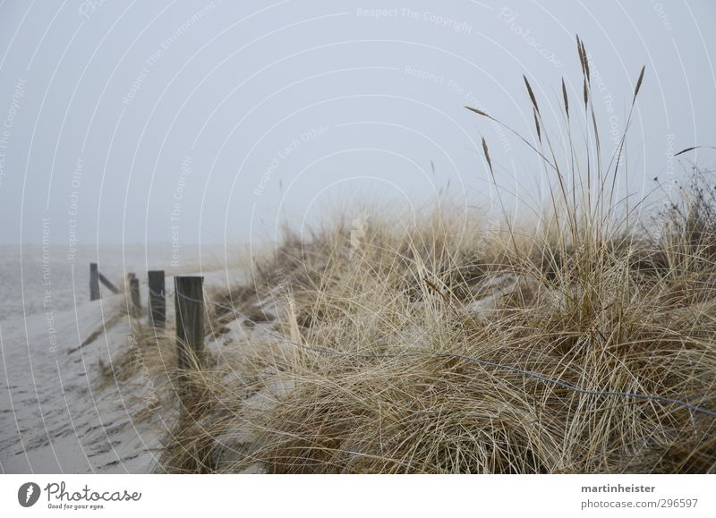 Nature Ocean Loneliness Calm Beach Cold Coast Gray Gold Wait Free Gloomy Longing Baltic Sea Beach dune Wanderlust