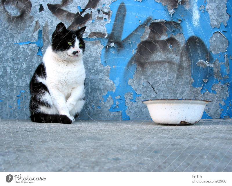 Cat Concrete Industry Appetite