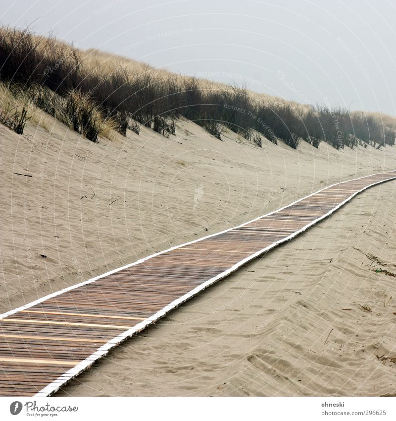Paths and paths Beach Island Sand Bad weather North Sea Dune Marram grass Beach dune Langeoog Lanes & trails Woodway Loneliness Colour photo Subdued colour