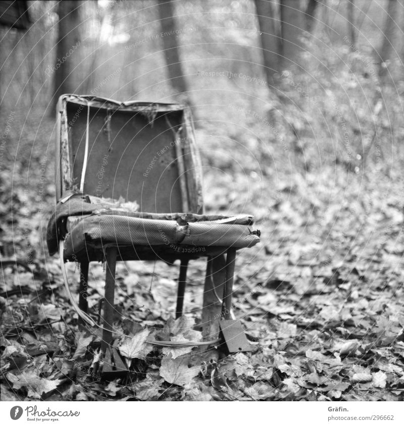 forest seat Environment Landscape Autumn Leaf Forest Chair Metal Old To dry up Broken Trashy Gray Black White Destruction Black & white photo Deserted