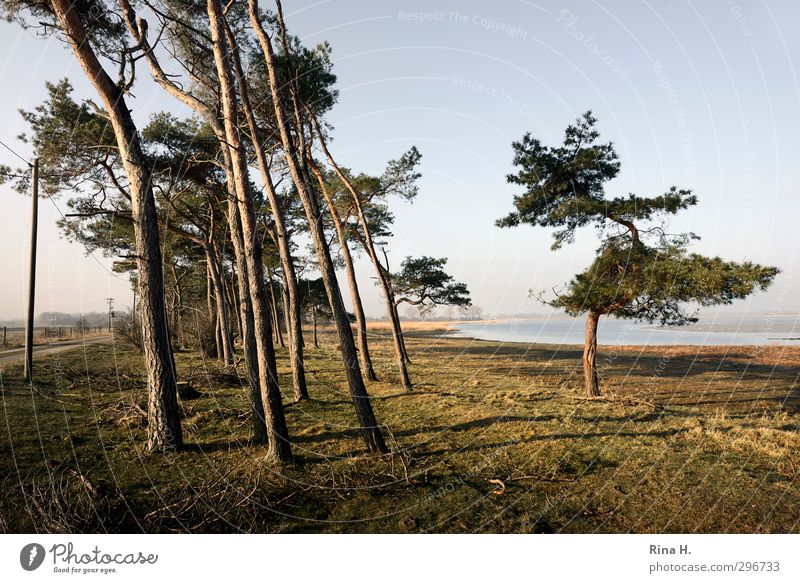 Nature Tree Landscape Meadow Grass Spring Lanes & trails Natural Beautiful weather Joie de vivre (Vitality) Tilt Rügen Pine