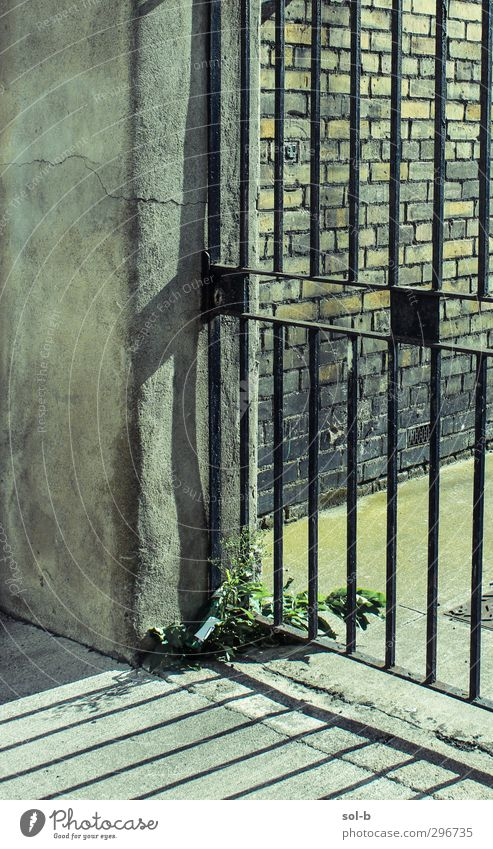 I I I I Plant Gate Wall (barrier) Wall (building) Stone Concrete Brick Lock Old Yellow Green Might Judicious Fairness Disciplined Boredom Sadness Loneliness