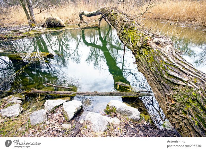 like a bridge Environment Nature Plant Earth Water Sky Clouds Spring Weather Tree Grass Bushes Moss Park Coast Pond Vienna Stone Wood To fall Lie Growth Brown