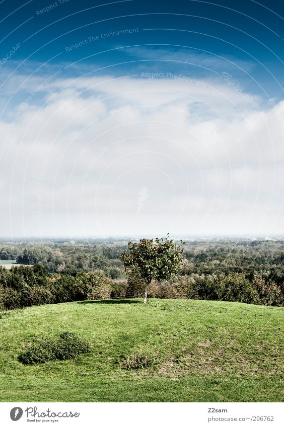 Good prospects Environment Nature Landscape Sky Clouds Summer Beautiful weather Tree Bushes Forest Hill Far-off places Tall Sustainability Calm Loneliness