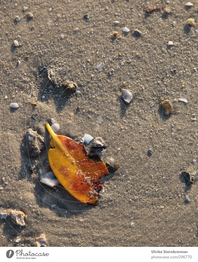 Nature Plant Leaf Beach Spring Coast Stone Sand Brown Lie Change Transience Tracks Trash Stalk Damp