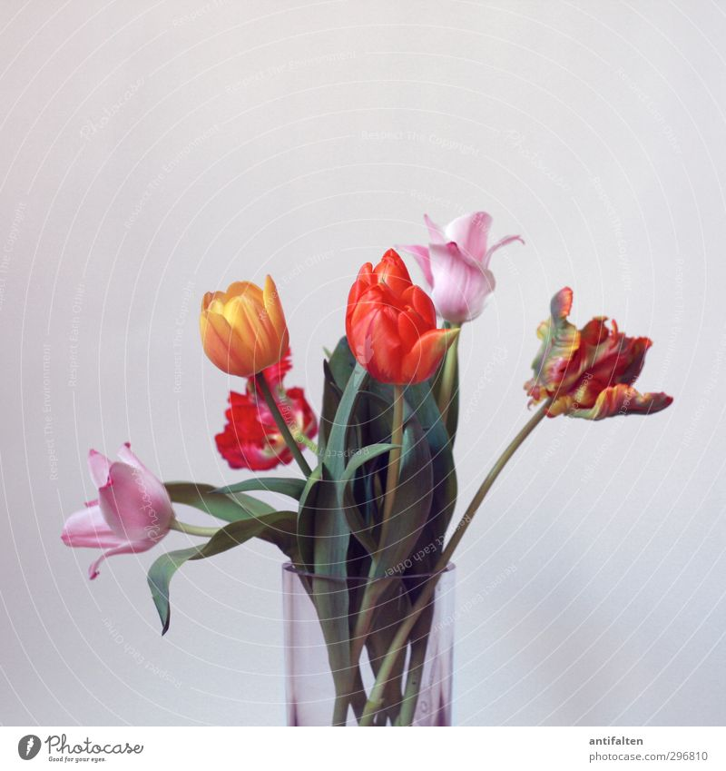 Green Beautiful Summer Flower Red Yellow Blossom Spring Pink Orange Decoration Glass Birthday Esthetic Retro Bouquet