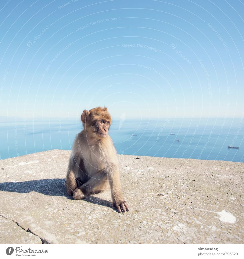Sky Water Ocean Animal Wall (barrier) Stone Horizon Watercraft Wild animal Sit Beautiful weather Observe Posture Cloudless sky Navigation Monkeys