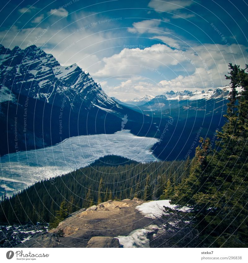 Ice bath paradise Landscape Spring Forest Mountain Coast Lake Cold Green Nature Canada Icefield parkway Rocky Mountains Coniferous forest Frozen Colour photo