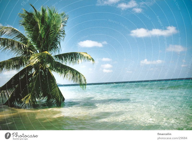 paradise Palm tree Ocean Clouds Sand Water Sun