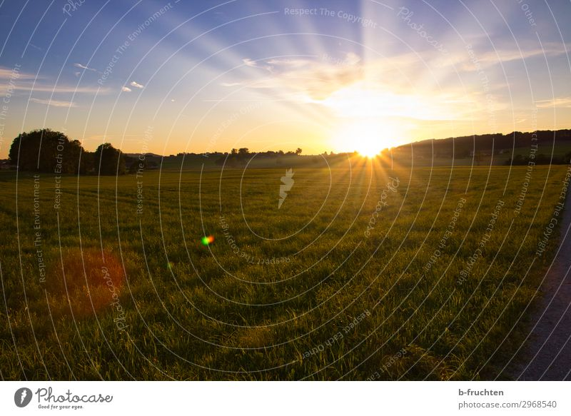 Sunset Nature Landscape Sunrise Summer Beautiful weather Grass Meadow Field Forest Free Happiness Hope Horizon Idyll Pasture Evening sun Austria Agriculture