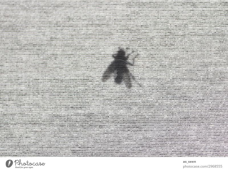 The Fly Window Curtain Roller blind Nature Animal Summer Insect 1 Flying Crawl Authentic Threat Dark Disgust Brash Small Gray Black White Emotions Boredom