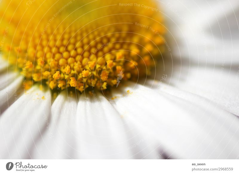 Nature Summer Plant Colour Beautiful White Flower Healthy Yellow Environment Blossom Spring Meadow Emotions Small Design