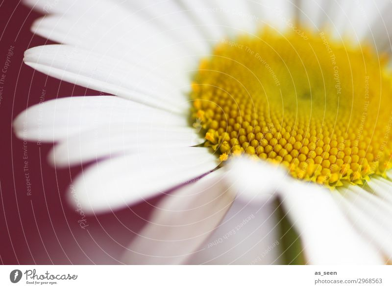 Summer Colour Beautiful White Red Flower Lifestyle Yellow Blossom Emotions Brown Design Contentment Fresh Esthetic Idyll