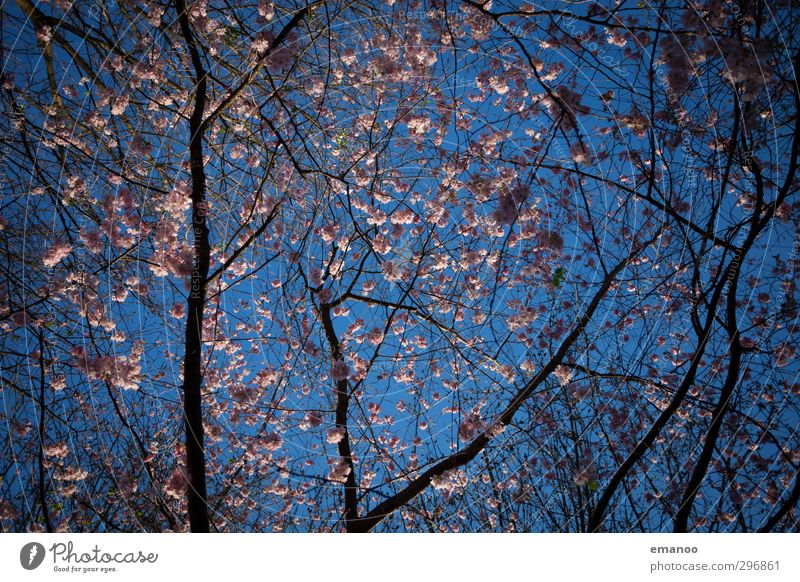 Sky Nature Blue Beautiful Plant Tree Landscape Spring Blossom Natural Park Pink Weather Growth Branch Treetop