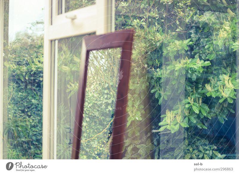 Reflections Living or residing House (Residential Structure) Garden Interior design Mirror Nature Plant Bushes Window Brown Green Glass Winter garden