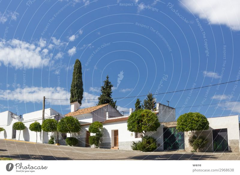 Typical Spanish house with white walls and cypress trees Vacation & Travel Tourism Village House (Residential Structure) Authentic Original Blue Green White