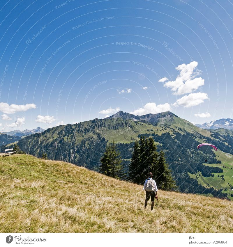 mountain world Contentment Tourism Summer vacation Mountain Hiking Paragliding Landscape Air Clouds Autumn Beautiful weather Grass Fir tree Meadow Alps Peak