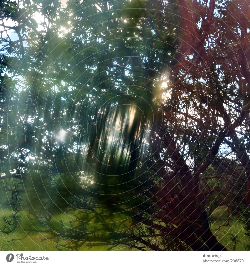 light streaks tree branches Nature Landscape Plant Spring Weather Fog Tree Leaf Forest Dream Faded Bright Retro Colour Surrealism Flare distorted painted