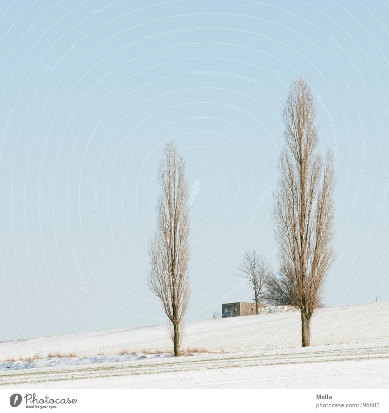 Tuscany of the North Environment Nature Landscape Plant Sky Winter Snow Tree Poplar Field Hut Building Transformer Growth Cold Blue Sustainability Calm
