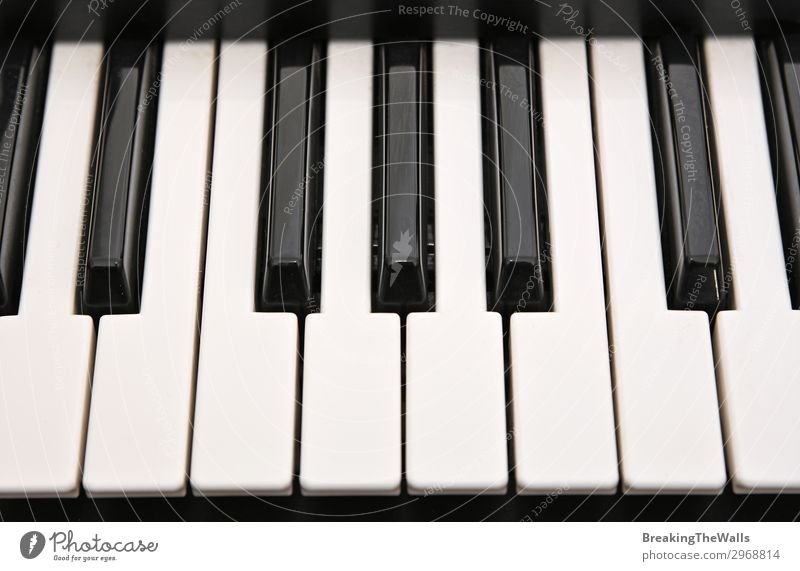 Musical keyboard background pattern Leisure and hobbies Art Keyboard Black White Piano Synthesizer Play piano Musical instrument Arrangement Classical