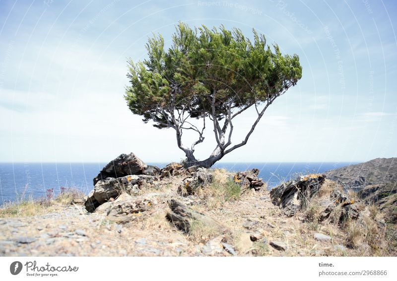 Sky Nature Tree Ocean Loneliness Mountain Life Environment Spring Coast Time Exceptional Rock Moody Horizon Earth